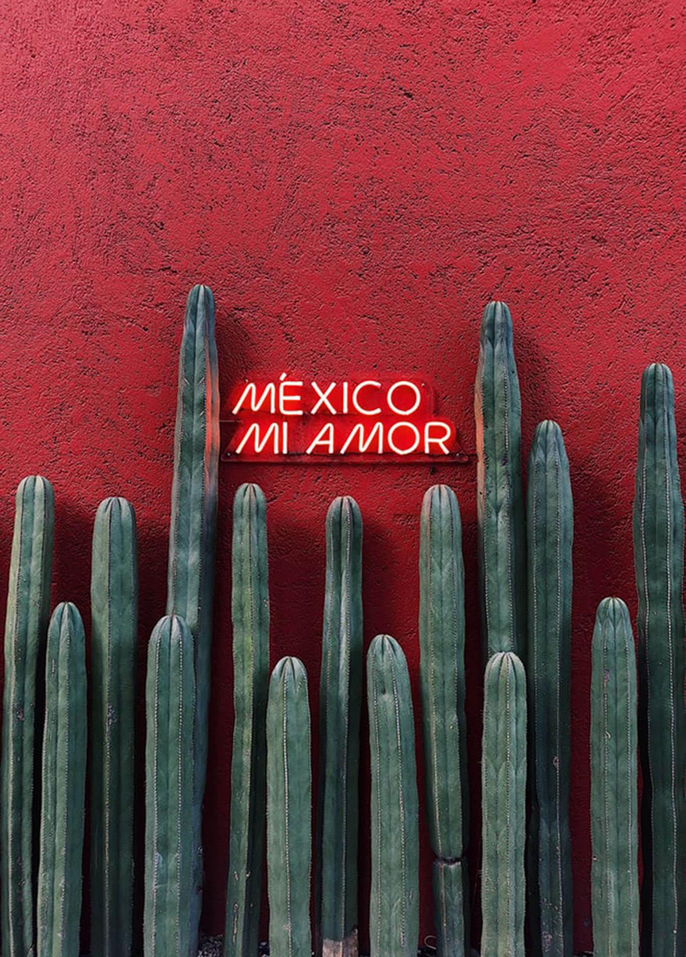 mexico-cactus-paisaje
