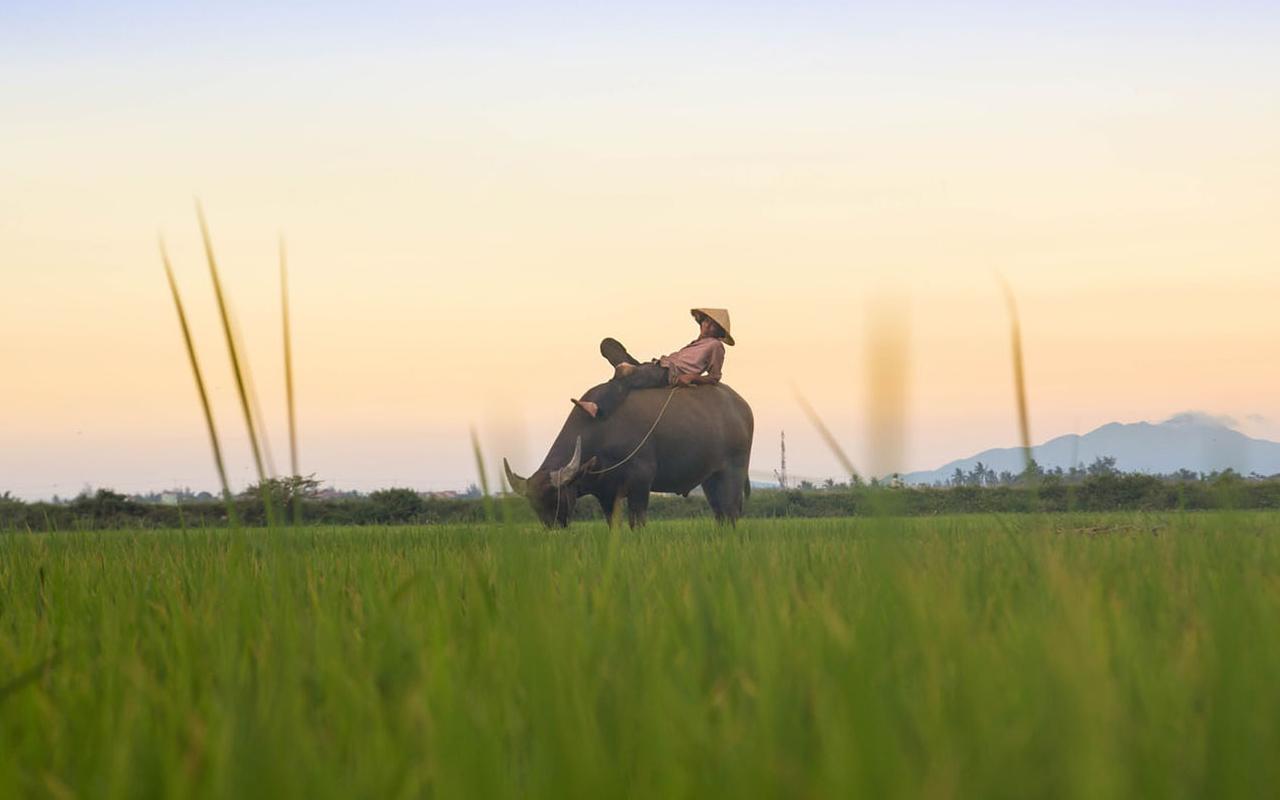 vietnam-campos-arroz-viaje-grupo
